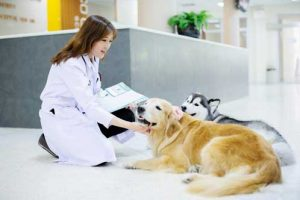 Veterinary Services In Winter Garden Fl Winter Garden